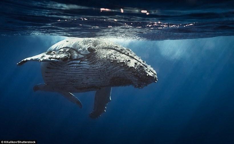 Lonely Planet рассказало о местах, где можно увидеть самых чудесных животных планеты