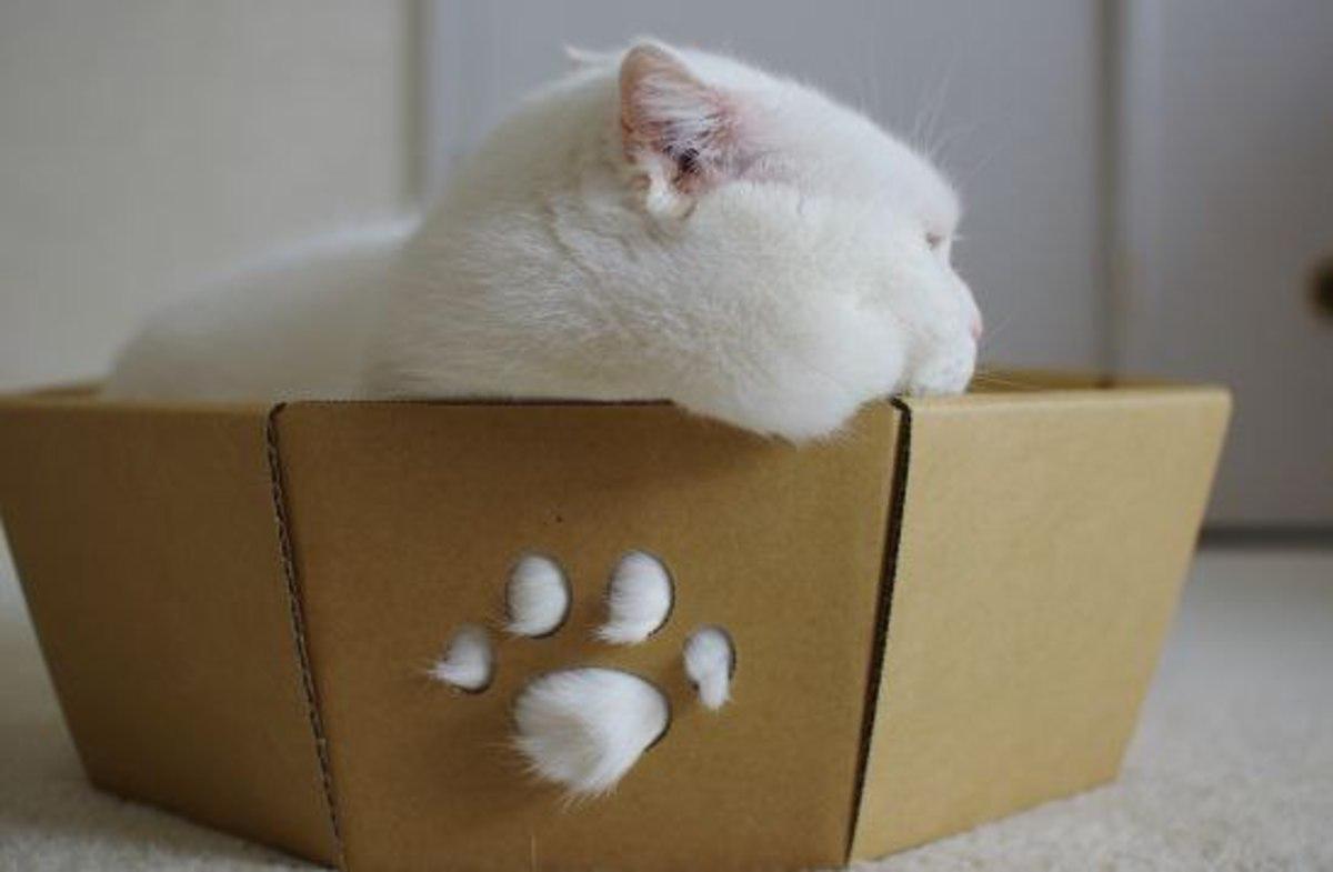 Хозяин решил избавиться от болеющего кота, но карма ему жестоко отомстила