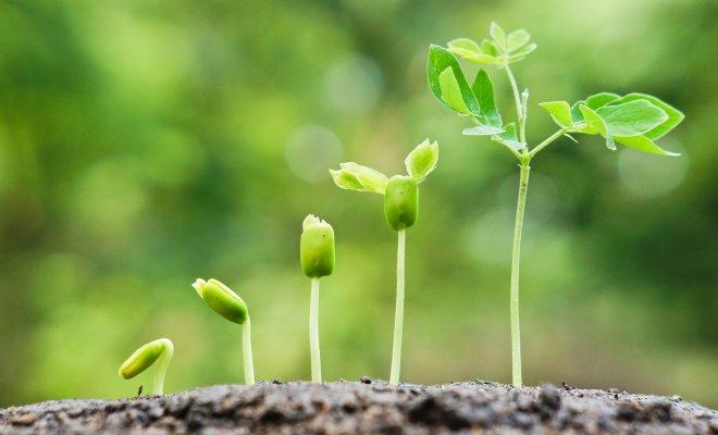 13 легких способов ускорить прорастание семян