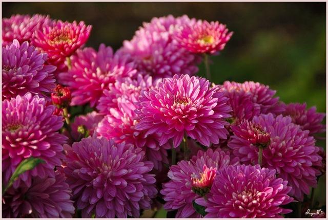 Фото, Нежные цветы!!!). Обсуждение на LiveInternet - Российский Сервис Онлайн-Дневников