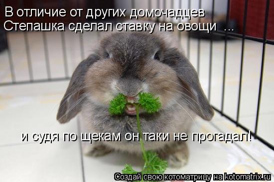 Котоматрица - В отличие от других домочадцев   Степашка сделал ставку на овощи  ...