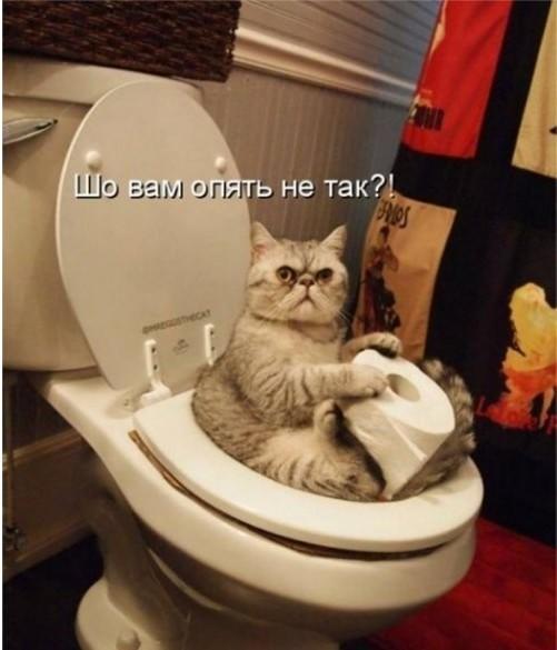 КОТОбудни :)