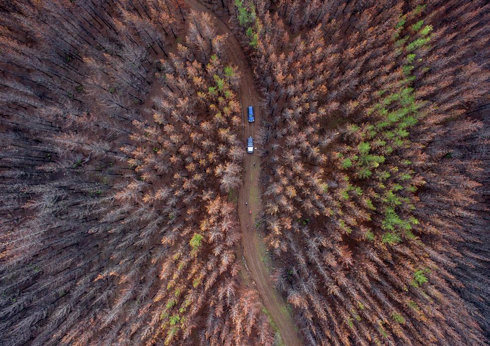 Так выглядит лес после лесных пожаров