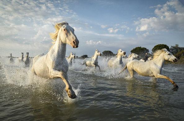 Фотограф запечатлел табун диких лошадей во Франции