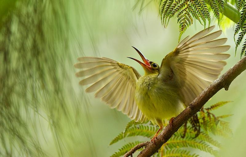 ТМГ невероятный птичий мир фото порно-бестцеллер