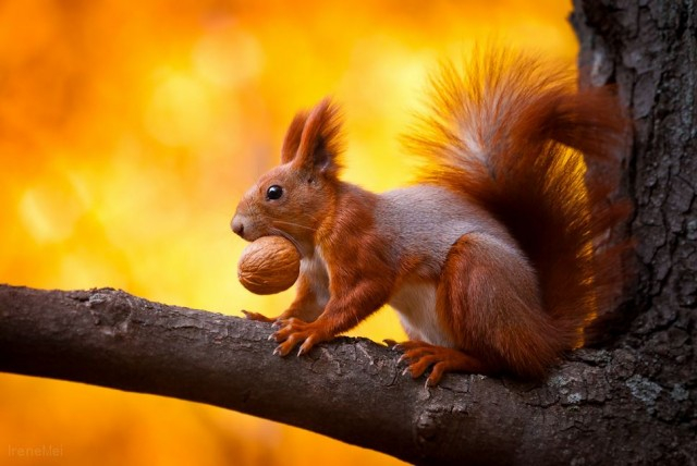 Красивые фотографии животных от Lars van de Goor