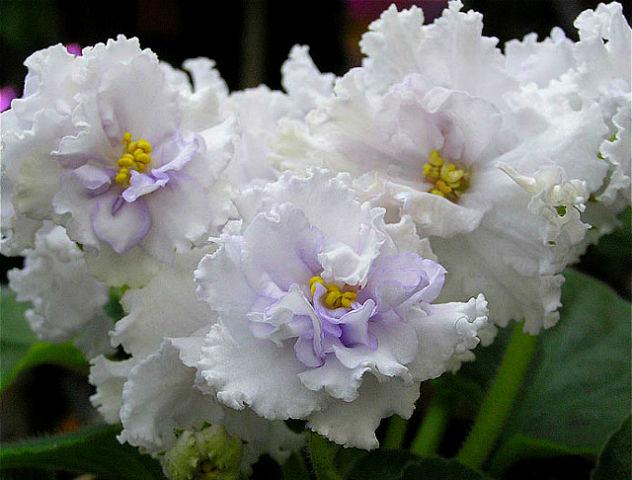 Десять растений для семейног…