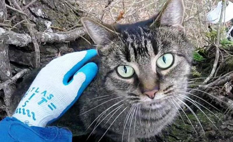 Серийный спасатель котов: американец вышел на пенсию и теперь снимает животных с деревьев