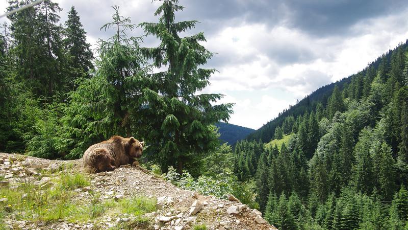 Медведь не дремлет