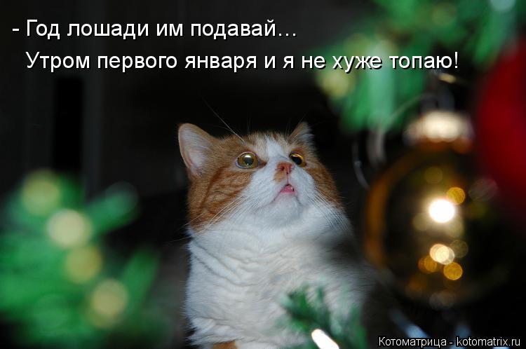 Котоматрица: - Год лошади им подавай… Утром первого января и я не хуже топаю!