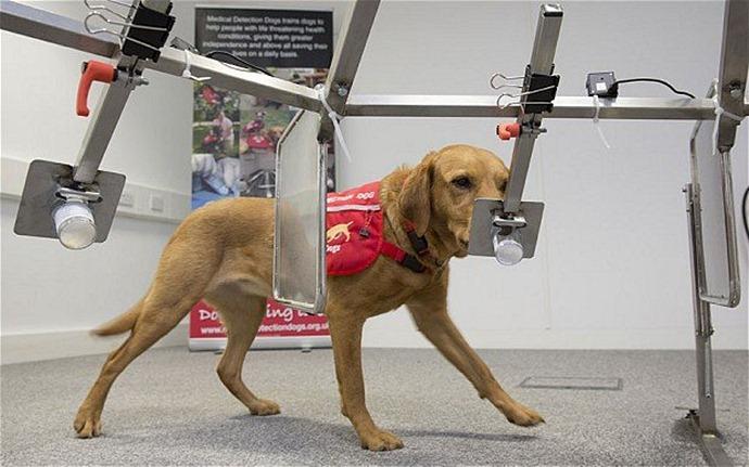 Собака нашла раковую опухоль у хозяйки