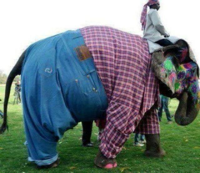 Если есть слон funny foto, индия, интересно, смешно, юмор