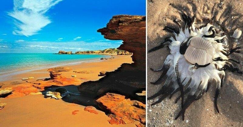 На берег Австралии выбросило инопланетно-подобное существо