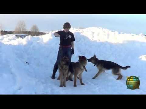 Собаки - выживаки)