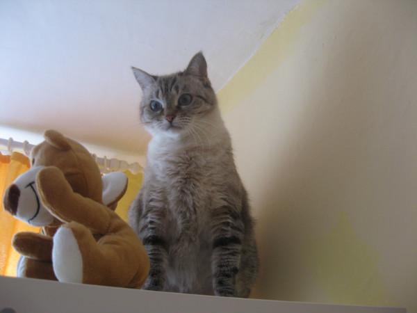 Тупая кошка