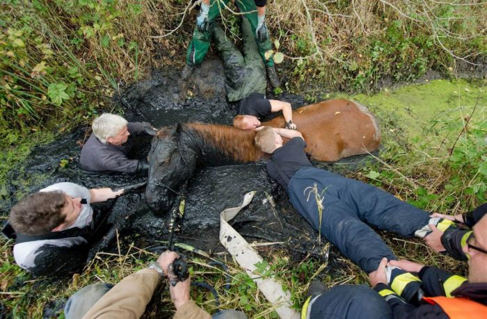 Спасение лошади из болота