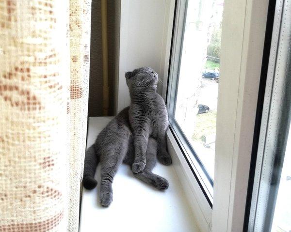 Трудная жизнь моей кошки. Объедают.