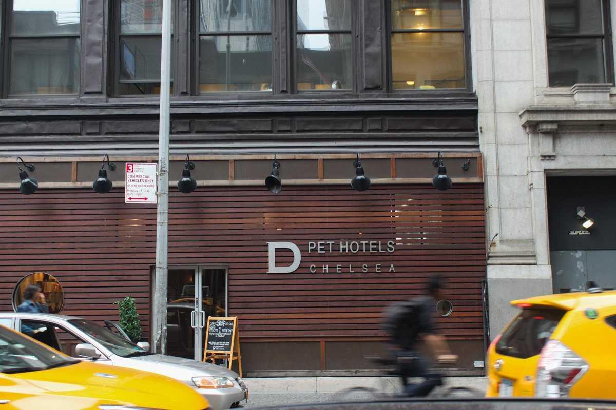 До 200 долларов за ночь: отель для собак в Нью-Йорке