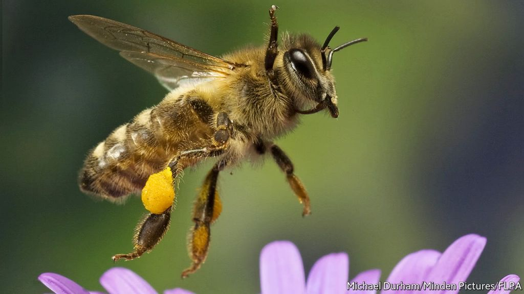 Все пчелы на Земле скоро вымрут