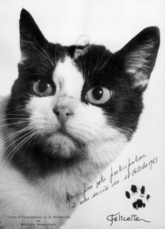 Покорители космоса: кошка-фр…