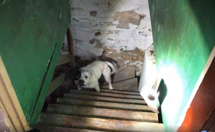 Люди переехали в новый дом и не знали, что кто-то очень одинокий уже давно ждет их… в подвале!