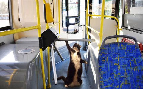 Москвичей просят делать селфи в автобусах. Напоследок!