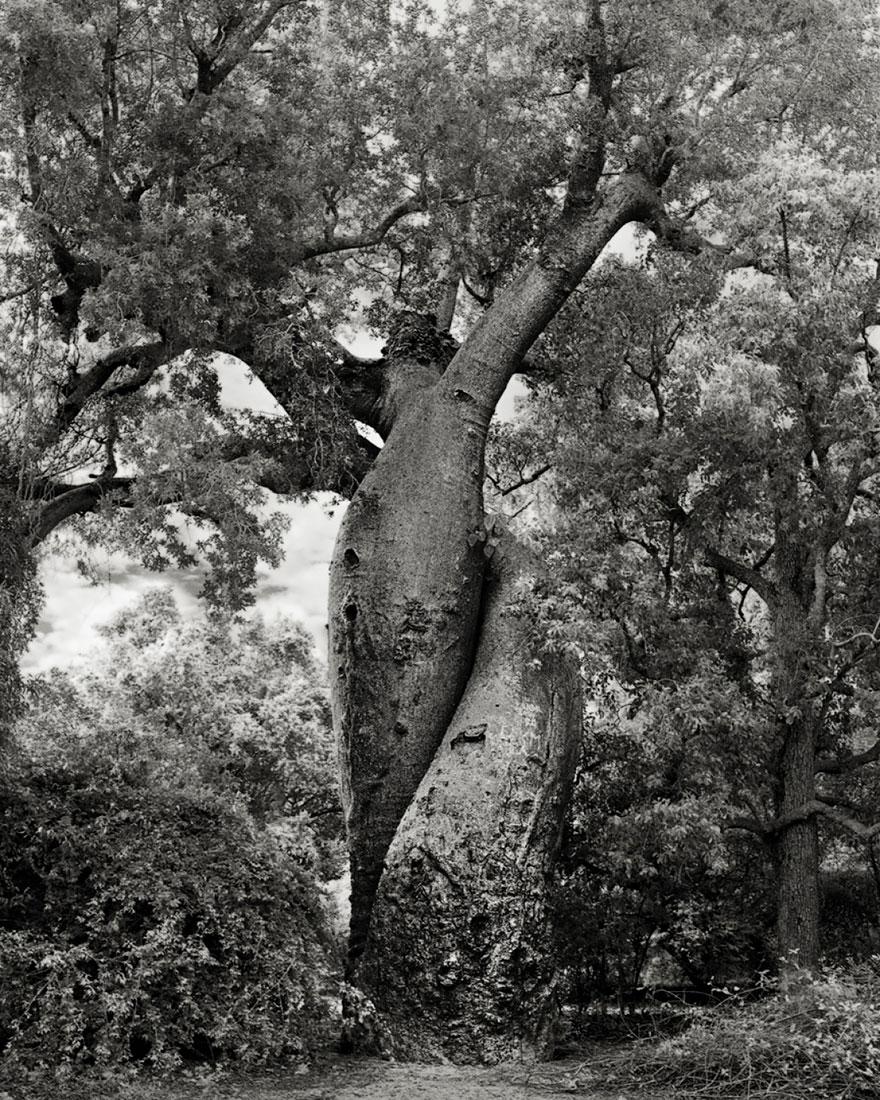 Деревья древние как мир в фотографиях из 14-летнего путешествия-20