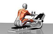 Раскрыта причина утомления мышц после нагрузки