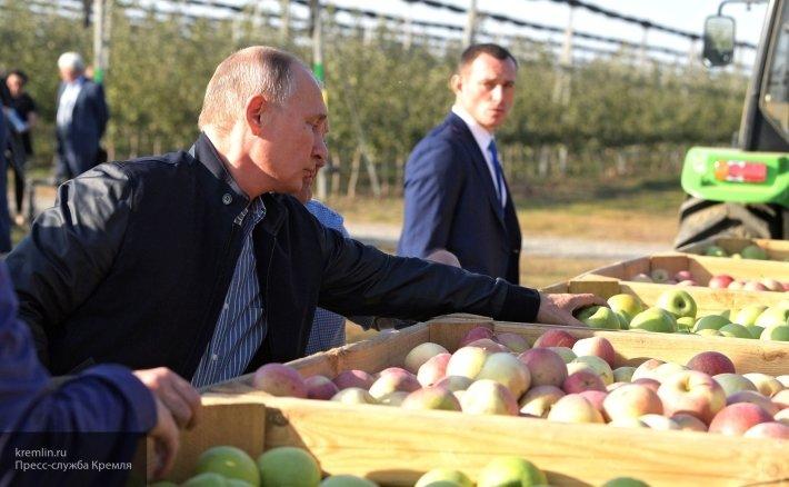 Путин рассказал о колоссальном росте экспорта зерна за 2018 год