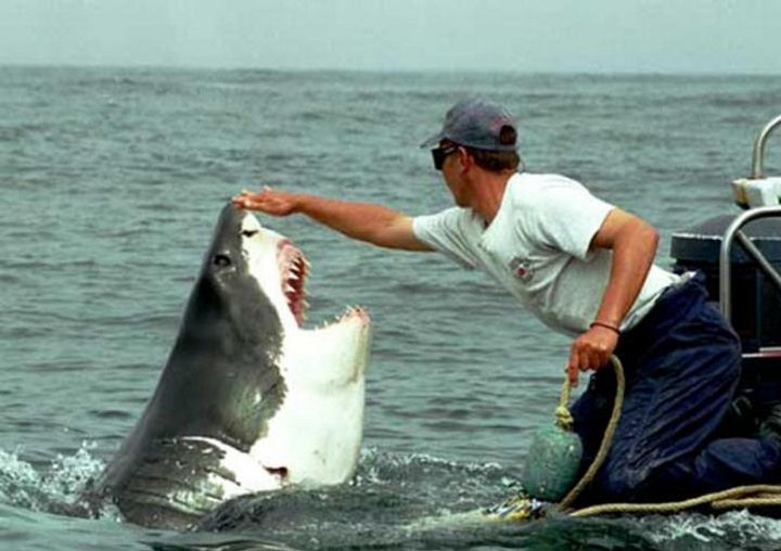 Настойчивая любовь акулы