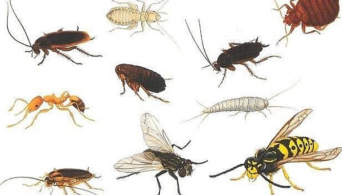 Как бороться с бытовыми насекомыми?