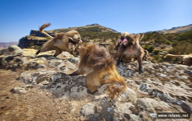 110 лучших фото-2012 от National Geographic
