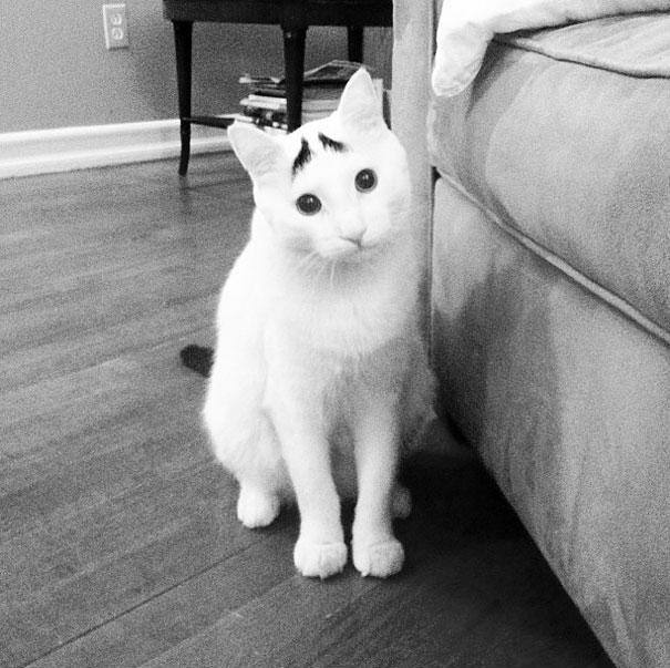 Сэм, кот с бровями (2)