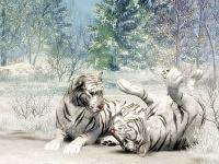 Белые тигры 22