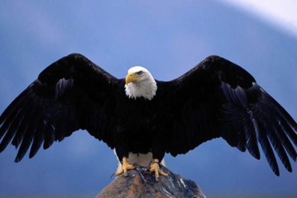 10 птиц, которых стоит избегать