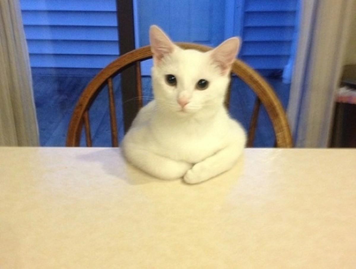 catrules04 15 правил жизни настоящего кота