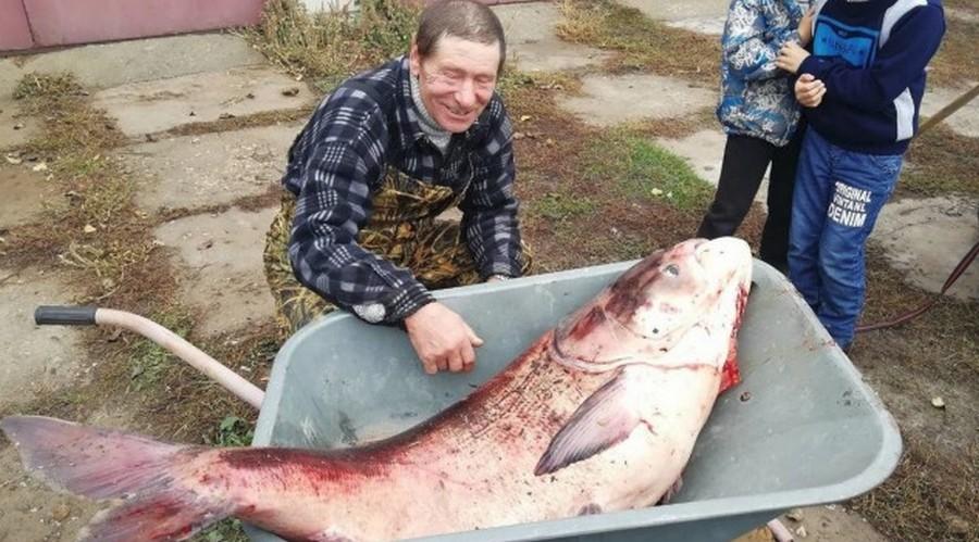 Заядлому рыбаку улыбнулась удача - трофейный улов, достойный Гиннеса