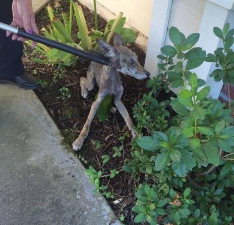 спасли собаку но это была не собака, оказалось что это не собака, спасение собаки, спасли собаку