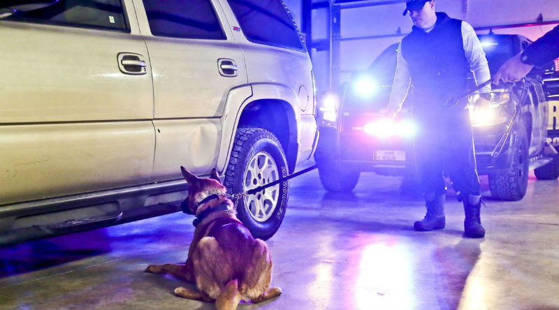 Кинологи штата Иллинойс угрожают усыпить служебных собак, если легализуют марихуану