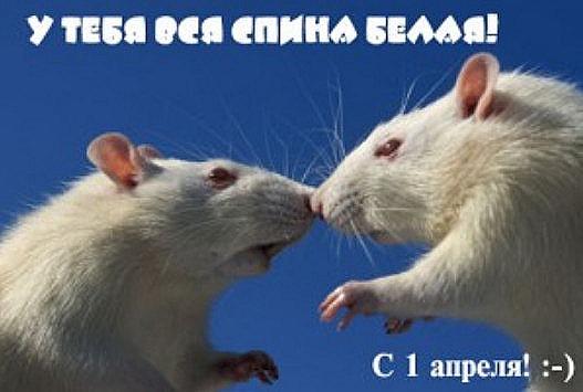 2012-04-01_130657