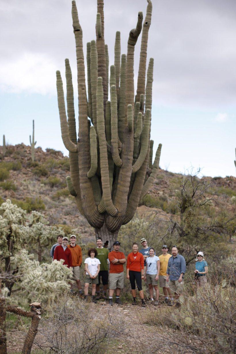 20 метров в высоту: огромные кактусы пустыни Сонора, в которых живут совы