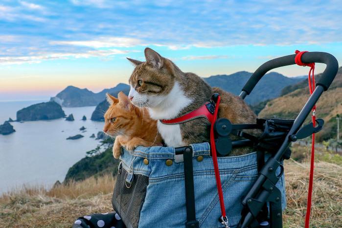 Коты-путешественники из Японии