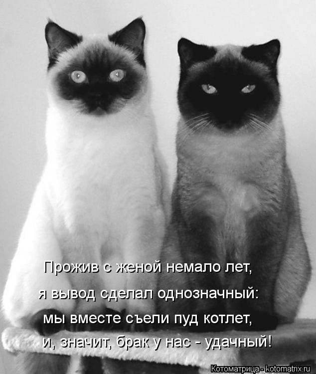 Котоматрица: Прожив с женой немало лет, я вывод сделал однозначный: мы вместе съели пуд котлет, и, значит, брак у нас - удачный!