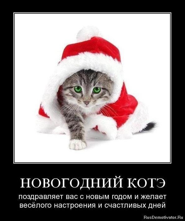 Статус смешной про новый год