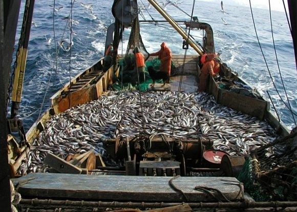 """""""Мы там боимся пошевелиться, а они преспокойненько рыбу ловят"""": на Украине возмущаются действиями России в Азовском море"""