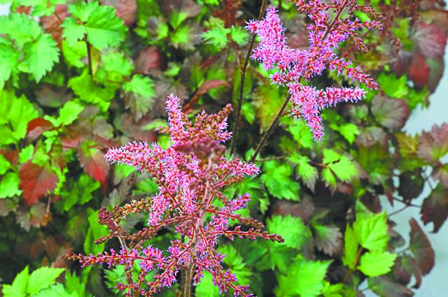 Декоративные растения: парад новинок