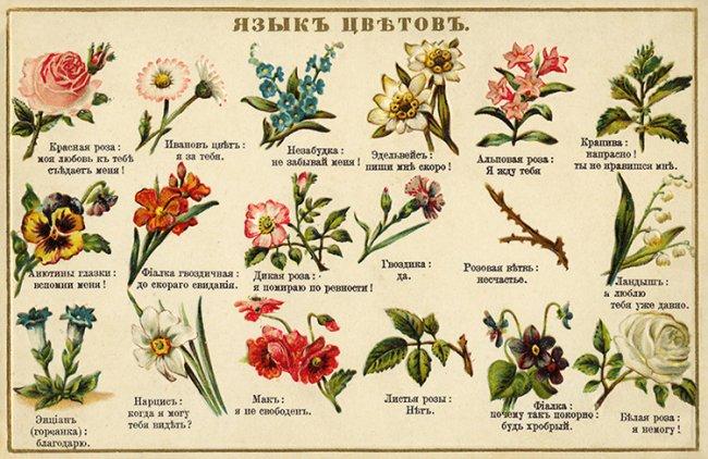 МИР РАСТЕНИЙ. Интересные факты о цветах (2)