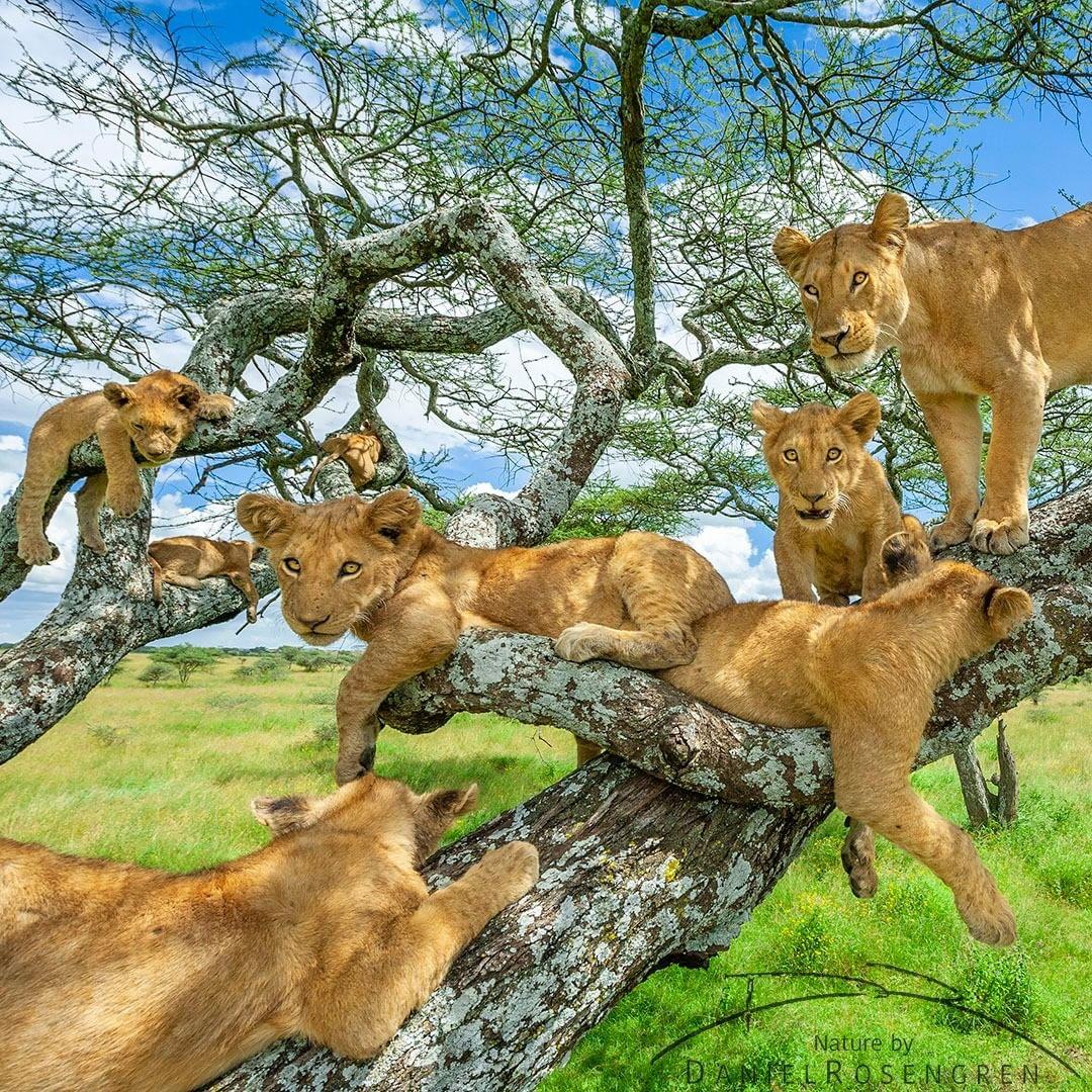 Дикие животные на снимках Даниэля Розенгрена