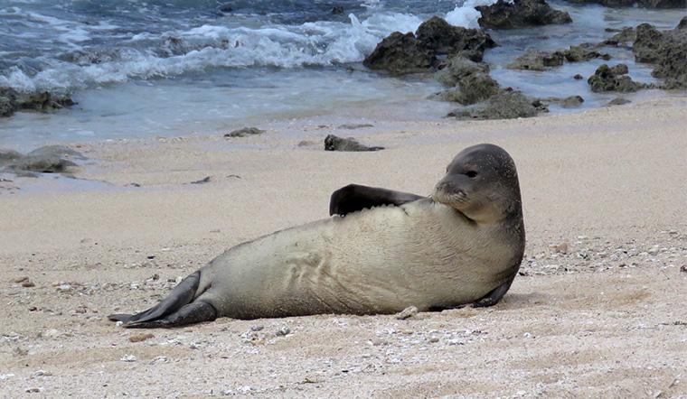 В США спасли тюленя, в носу которого застрял морской угорь