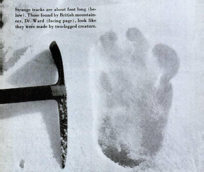 Знаменитый след «йети», снятый во время экспедиции 1951 года на Эверест анализ, днк, йети, медведь, наука, новости, тайна, ученные